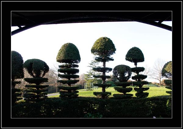 Topiary by Bonvilston