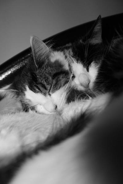 Catnap by breakawayfromme