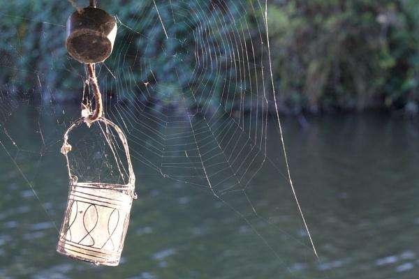 Web by robberridge