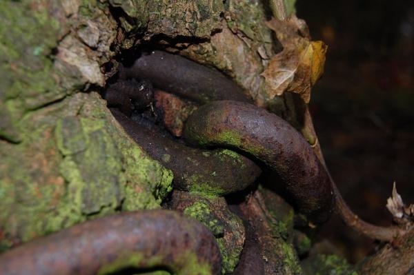 tree huggers nightmare by lawsonwazere