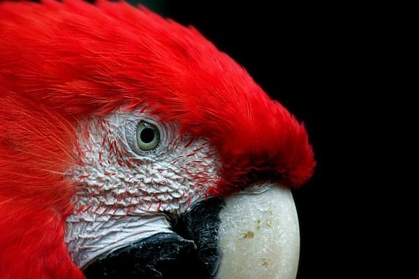 Big Red by EdMarshall