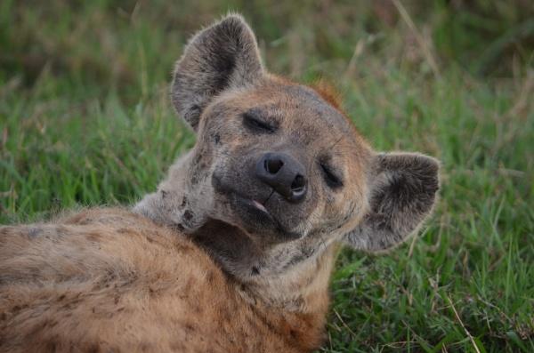 Hyena by OceanOak