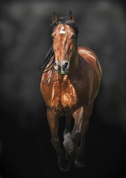 Warhorse II by cadishead