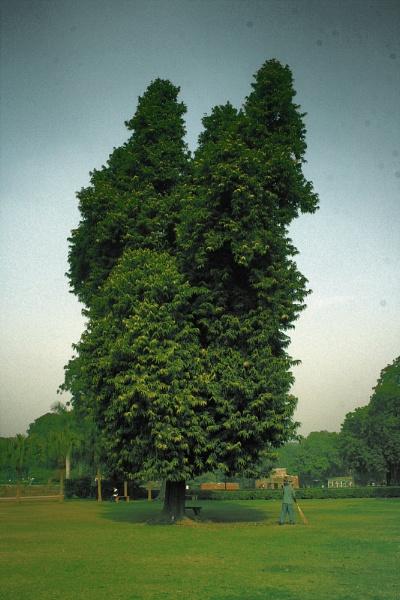 Quteb Monar Garden New Delhi India by faraidoon