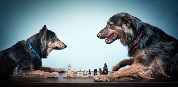 Grandmasters by TheWanderer