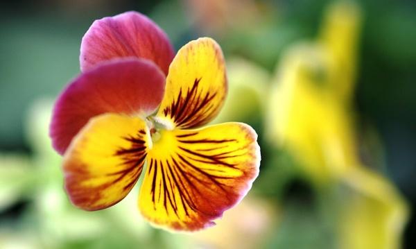 Yellow flower by bglimaye