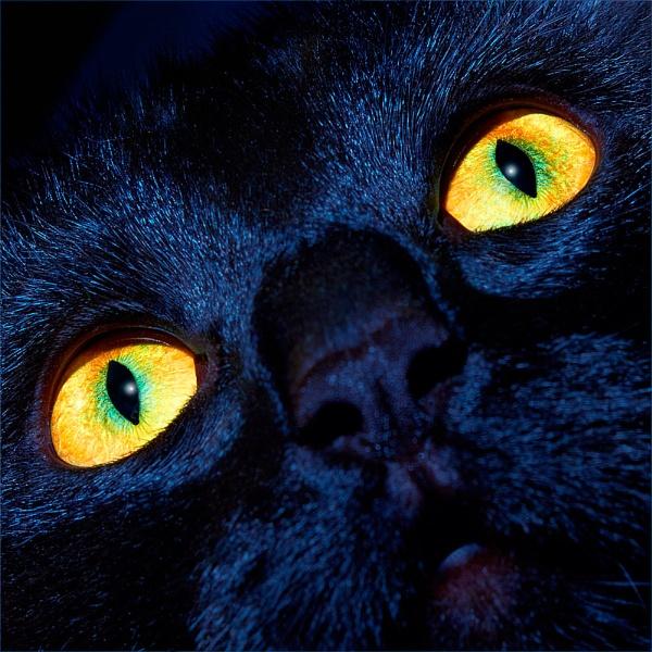 Moonlight Moggie by cameracat