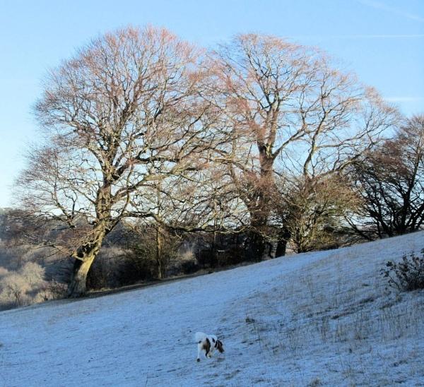frosty walk by kimmy666