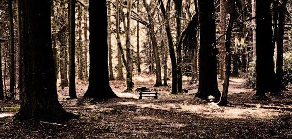 winter woods by thatmanbrian
