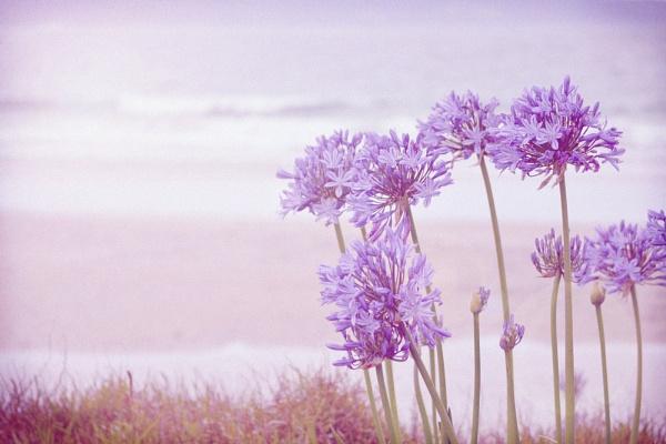 Summer in Full Bloom by delz