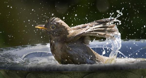 Splish Splash by danbrann