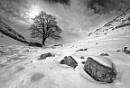 Sycamore gap in the Virgin Snow.