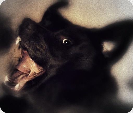 The Vampire  Dog.. by Bat_Babes
