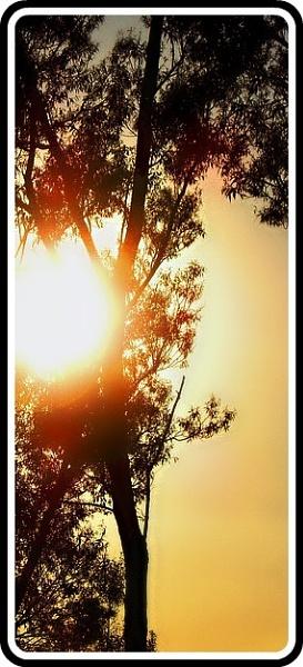 Sun Shadow\'s.. by Bat_Babes