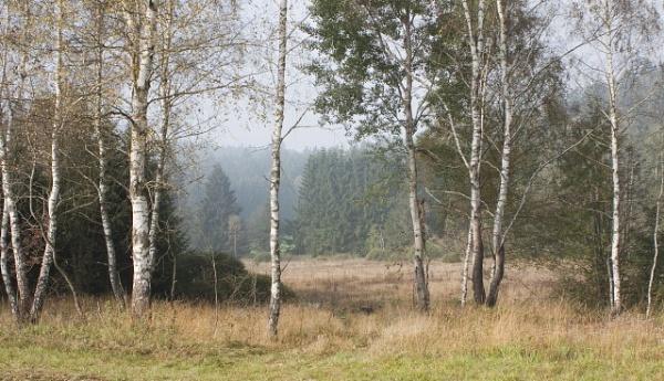 Bavarian Forst by lionking