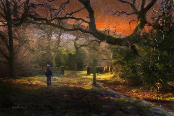 Fairytale Wood by jonirock