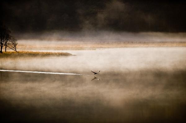 Skimmer by Goggz