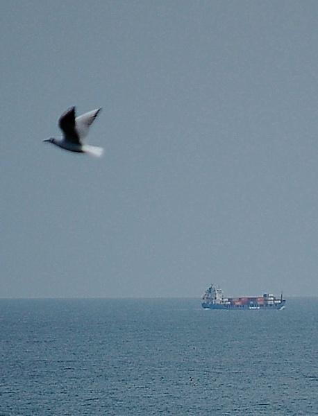 Gull intervention by kopo