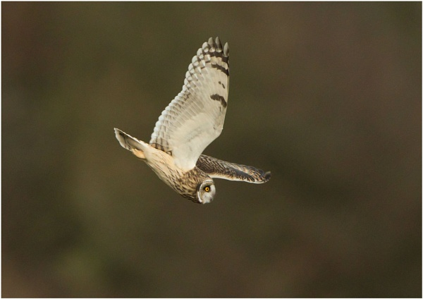Hunting seo Isle of wight by DannyVokins