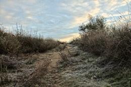 Frosty Uphill Path