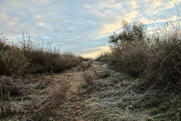 Frosty Uphill Path by Daisymaye