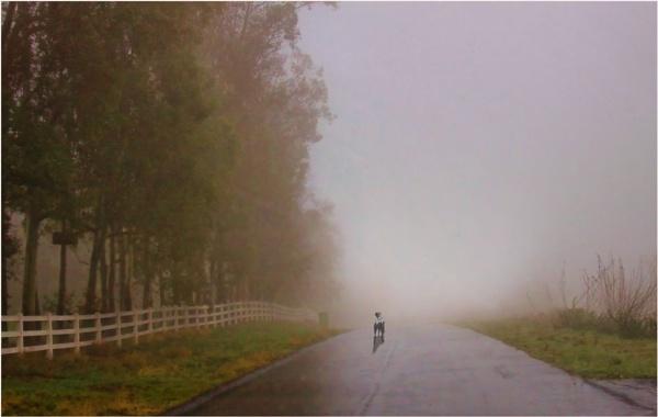 Lonesome Dog by Daisymaye