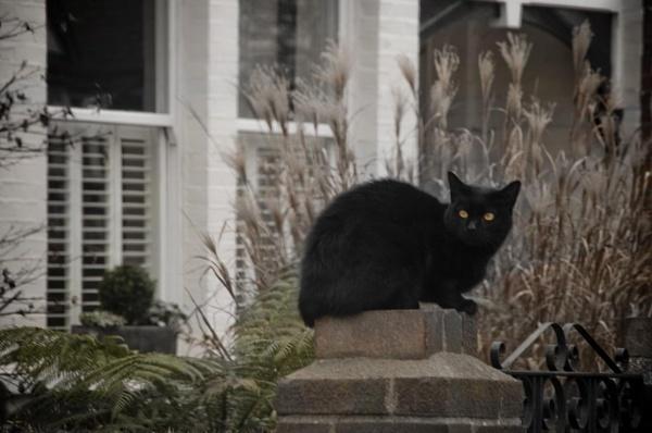 Black cat by lvphotogallery