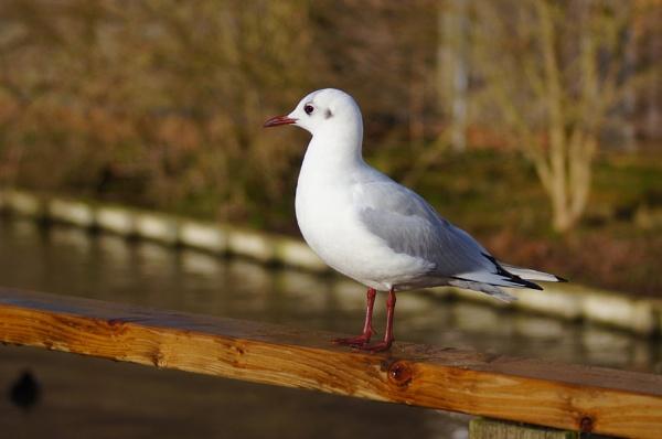 bird by christinecilia