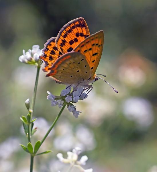 Grecian Copper by mattberry