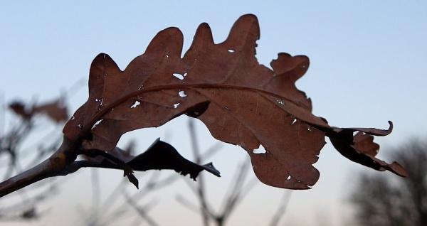 Winter Leaf by sazzykins