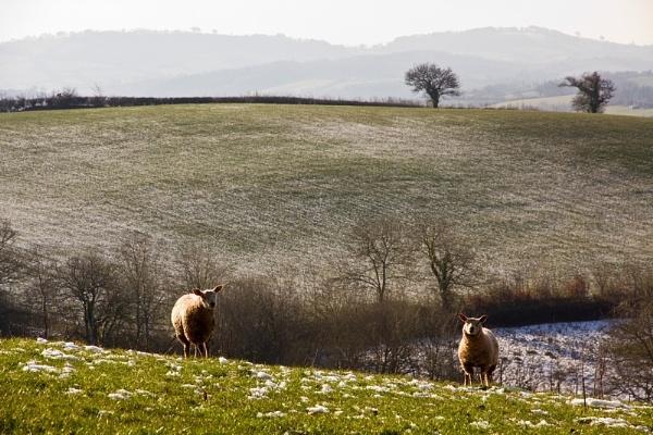 Winter in Devon by chasing_tarmac