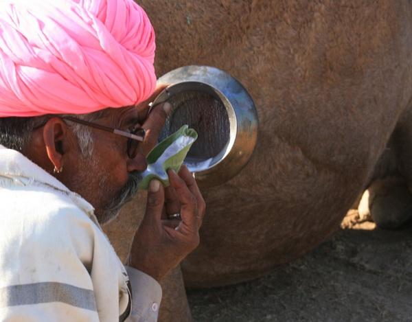 drinking camel milk by dsrathore999