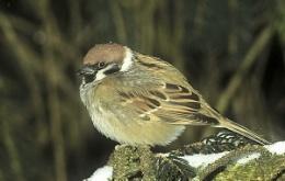 Bird II.