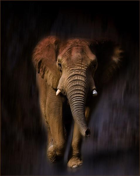 Elephant Running by Daisymaye