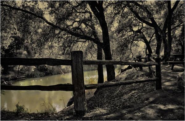 The Pond by Daisymaye