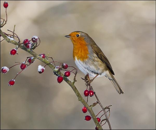 Winter Friend by jim5955