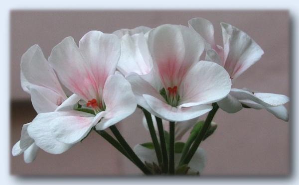 Simply White by amarmishra1910