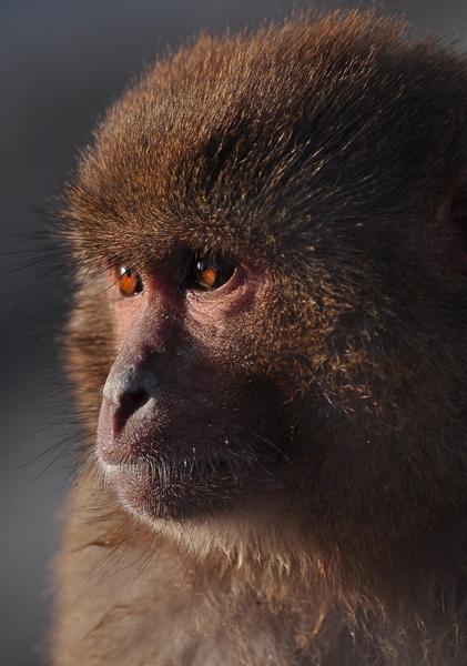 Monkey by Saibal
