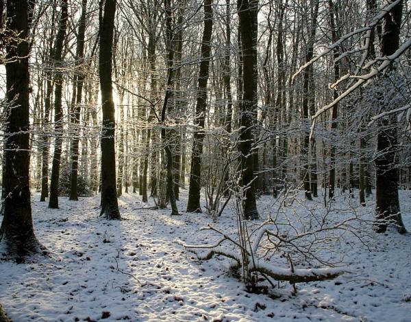 Winter Woods by Glen-W