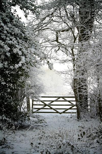 Winter Woods 2 by Glen-W