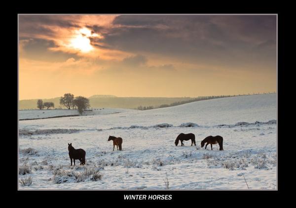 Winter Horses by PaulJenkins