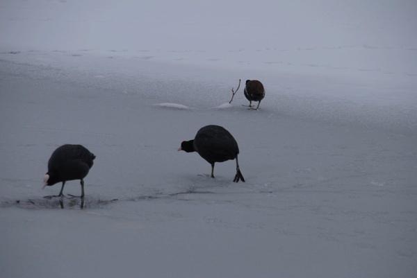 Walking on ice by Chinga