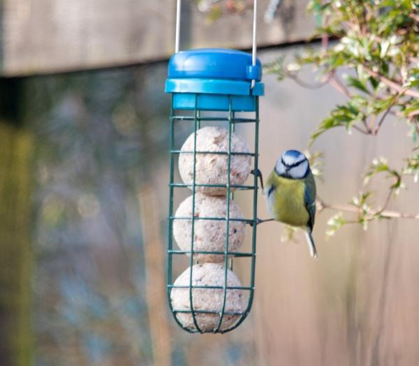 Feeding time in the garden by oaklea