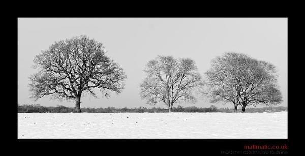three trees by mattmatic