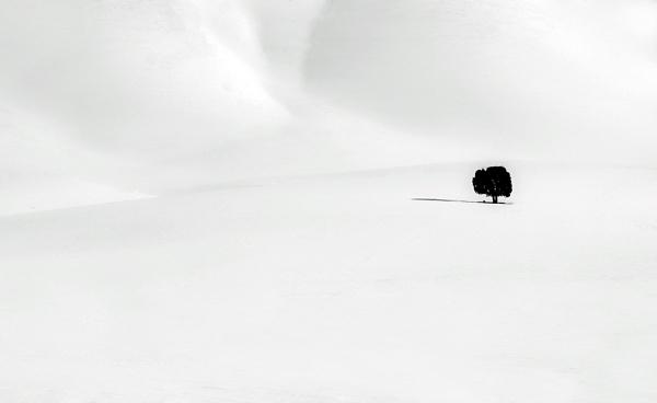 tree alone by saeedyounesi