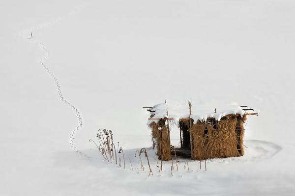Desert Cottage by saeedyounesi