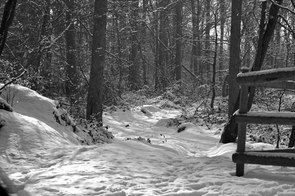 Woods near Tring by robberridge