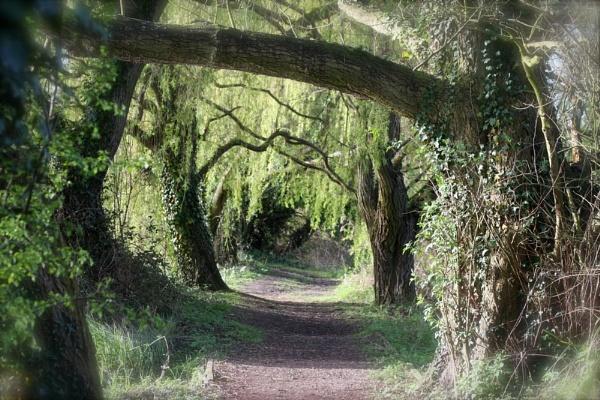 Secret garden by robberridge