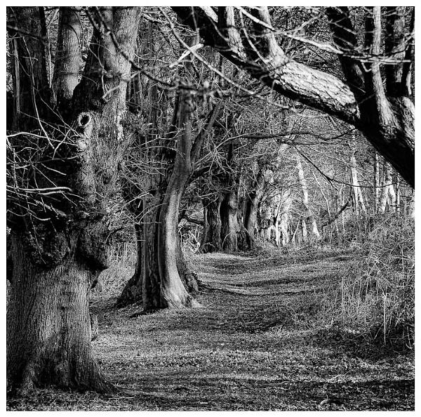 Weird Woods by thatmanbrian
