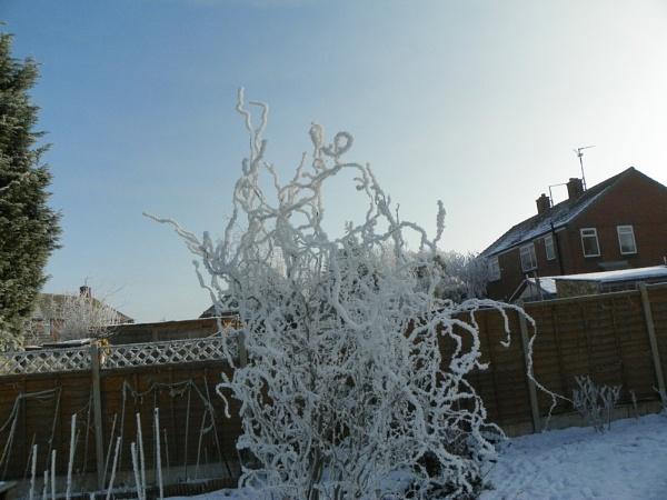 Haw frost by CherWass